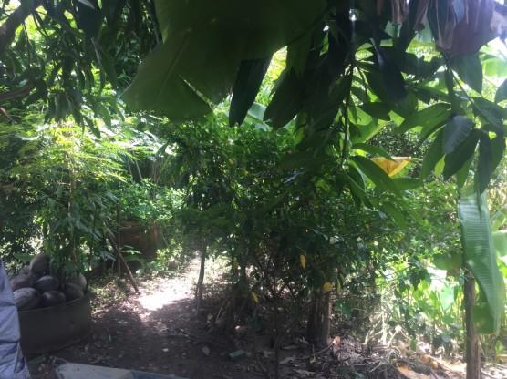แจกต้นไม้ k.ทองปลิว_๑๗๐๗๒๔_0013