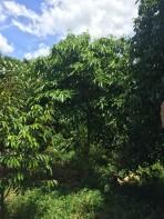 แจกต้นไม้ k.พีระพัฒน์_๑๗๐๗๒๔_0001
