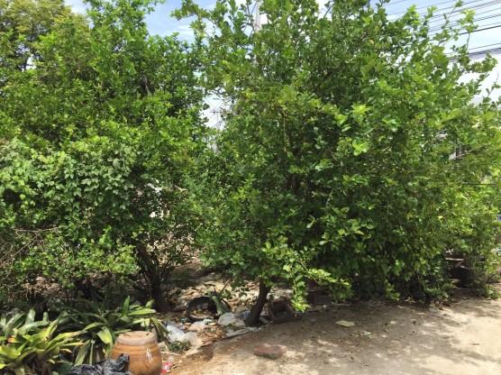 แจกต้นไม้ k.สอาด_๑๗๐๗๒๔_0001