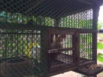 แจกต้นไม้ k.สุมาลี_๑๗๐๗๒๖_0008