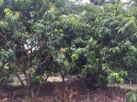 แจกต้นไม้ k.สุวิชา_๑๗๐๗๒๖_0017