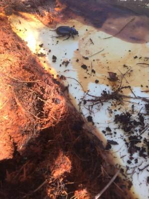 ปัญหาโรคแมลงมะพร้าว_๑๗๐๘๒๒_0018